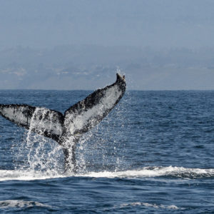 Where to Whale Watch in Orange County